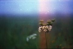 hutě_stmívání_kvítí_m