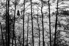 stromovapavučinam