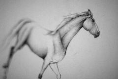 Skice koňská