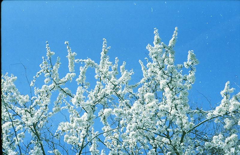 Modrobílé jaro