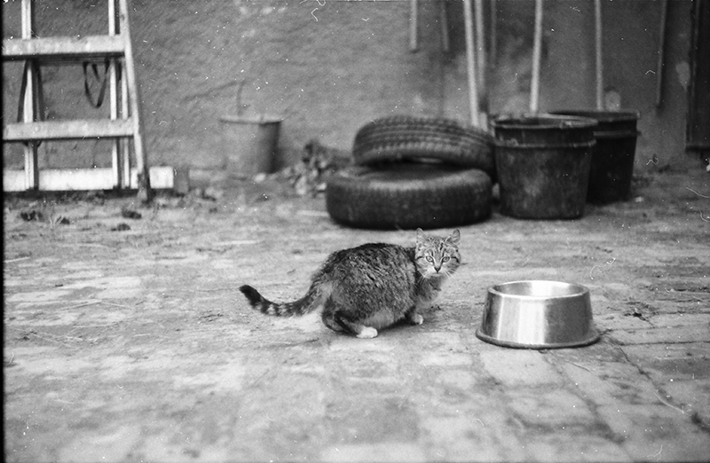 kočka_jarom