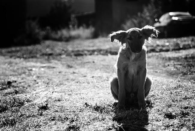Typické štěně