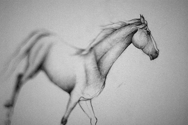 Skice-koňská